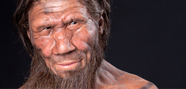 Neanderthals' distinctive face shape explained