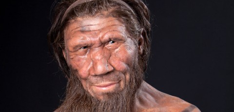 Close view of a Neanderthal face reconstruction