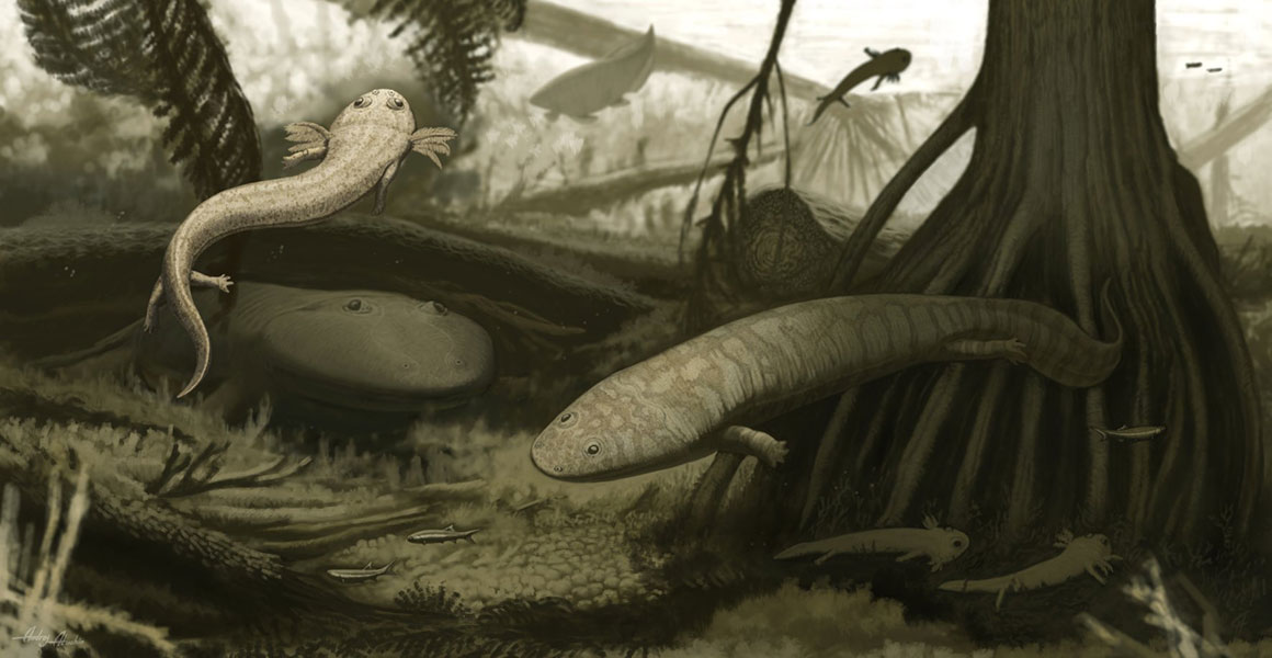 Reconstruction of the ancient amphibians in their tropical lake habitat