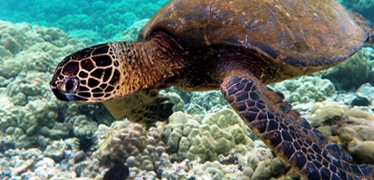 Turtles can tolerate warmer temperatures, given time