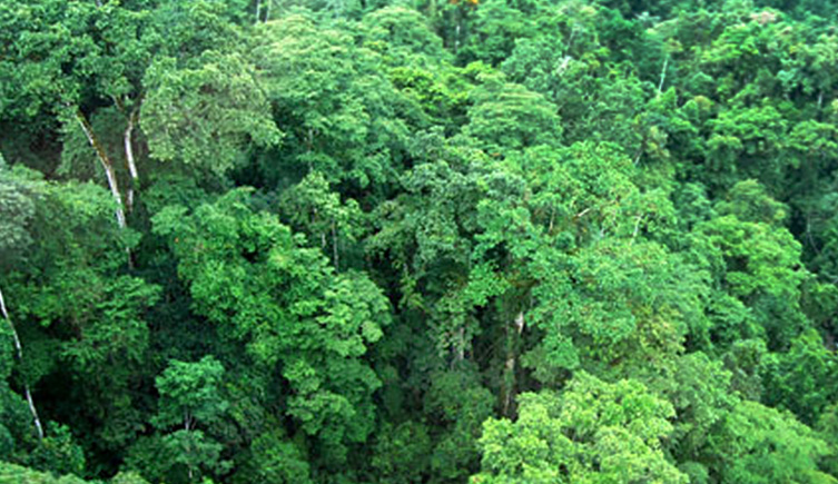 Forest in Madagascar