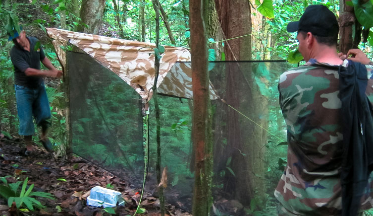 Sampling in the rainforest