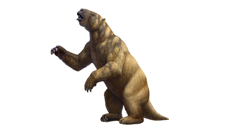 two-column megatherium