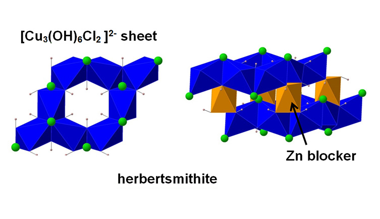 The atomic structure of herbertsmithite