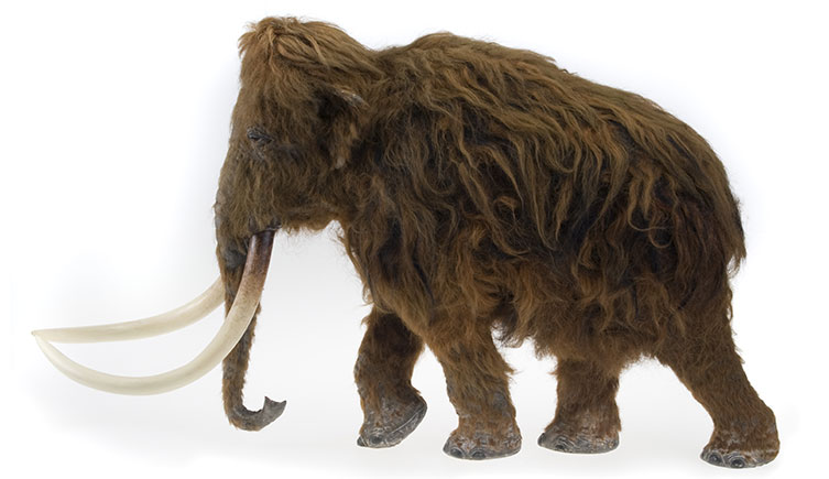 Model of a woolly mammoth