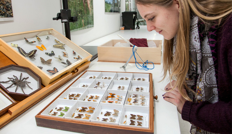 Identifying species in the Museum's Centre for UK Biodiversity