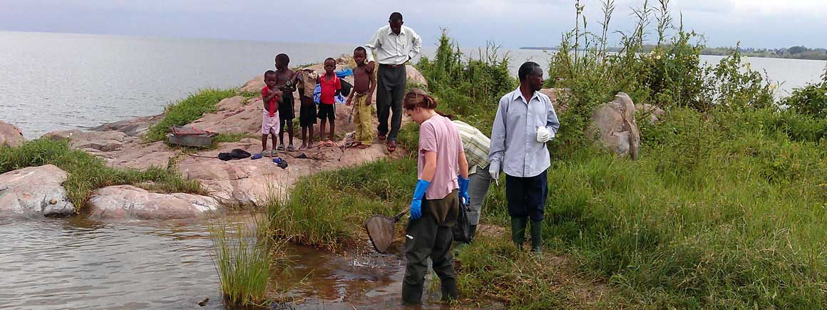Dr Anouk Gouvras and colleagues collecting aquatic snails at Lake Victoria in Tanzania.