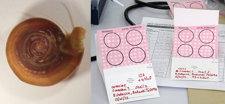 An aquatic snail and DNA storage cards
