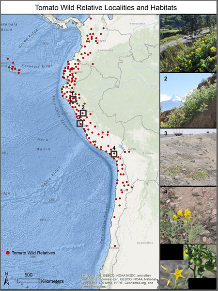Map with dots of tomato wild relative locations and photos of habitats