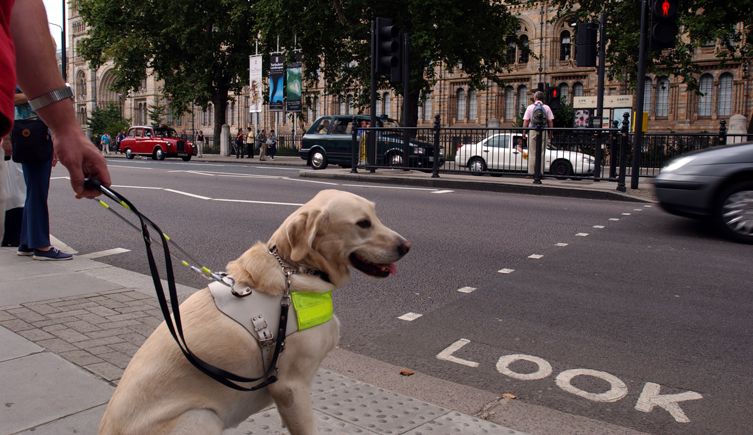 guide-dog