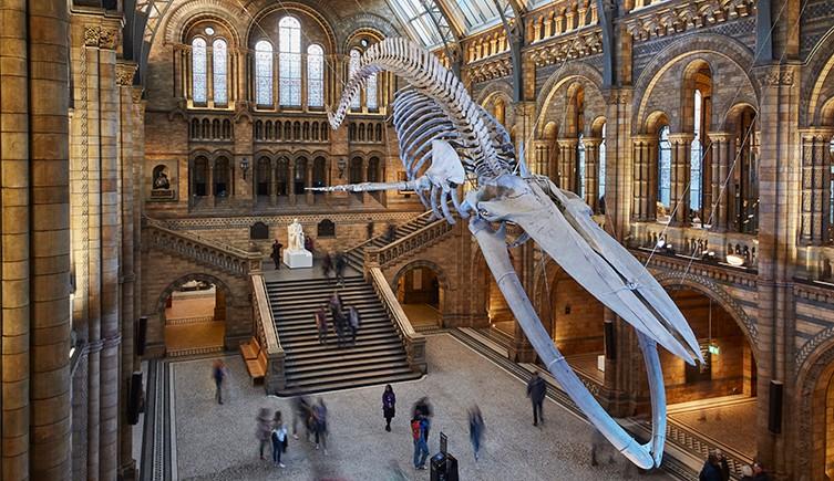 Membership | Natural History Museum