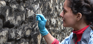 A person swabbing microorganisms on the wall of the Tower of London for the Microverse project