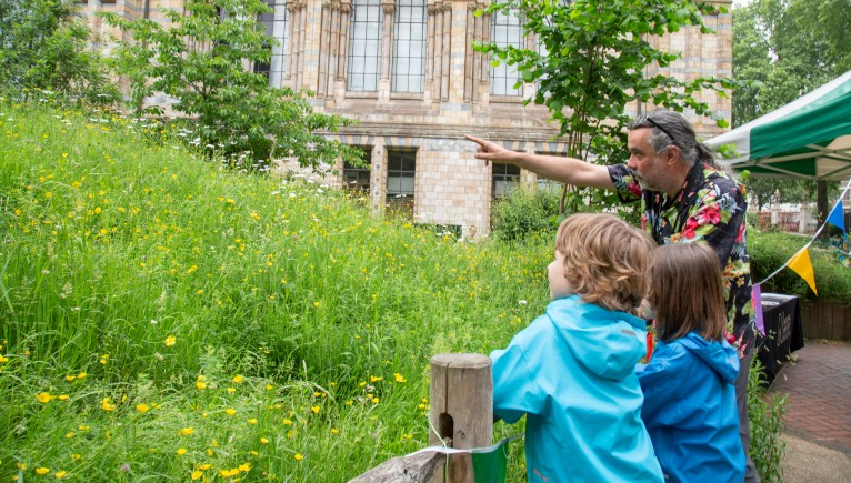 BioBlitz in the Wildlife Garden | Natural History Museum