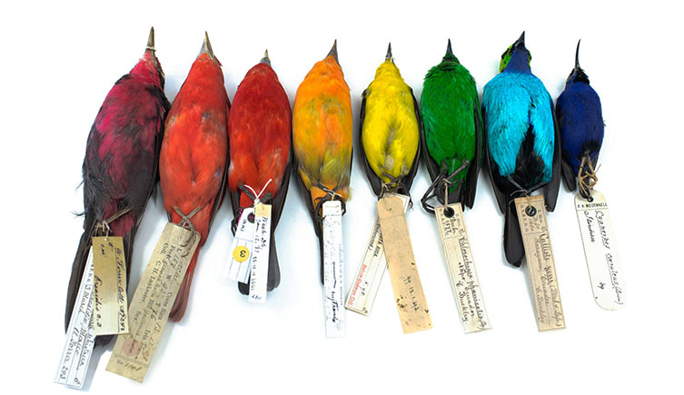 rainbow-tanagers-two-column