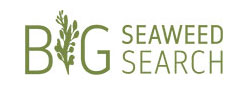Big Seaweed Search logo