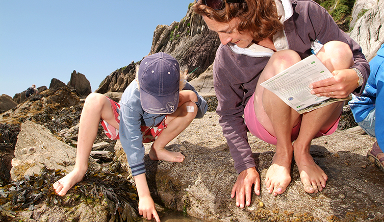 Family looking for seaweeds in a rockpool