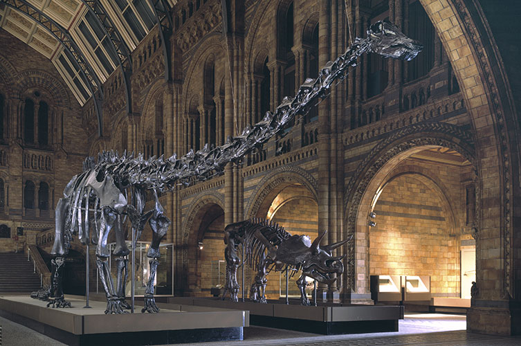 Photo of Dippy and Triceratops in Hintze Hall