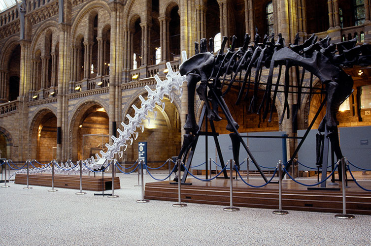 Photo showing Dippy with a cardboard tail