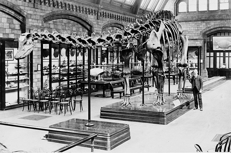 Black and white photo of Dippy next to Arthur Coggeshall, the man in charge of the specimen's construction