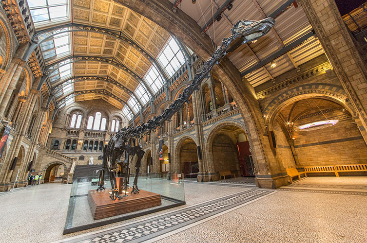 Photo of Dippy with Hintze Hall's impressive ceiling in view