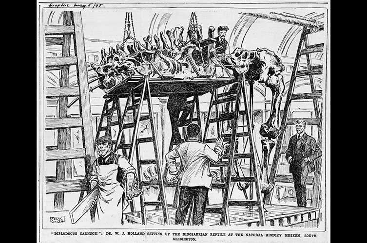 Illustration of Dippy being built, featured in weekly newspaper The Graphic in 1905