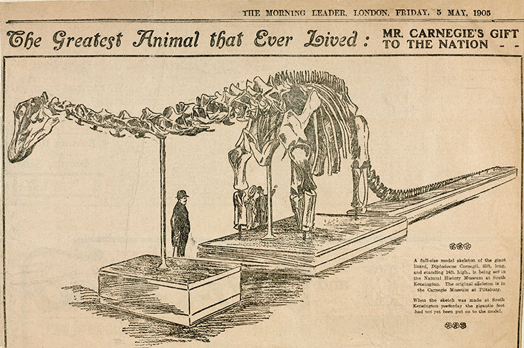 Drawing from the Morning Leader newspaper on 5 May 1905 with the headline 'The Greatest Animal that Ever Lived: Mr Carnegie's Gift to the Nation'