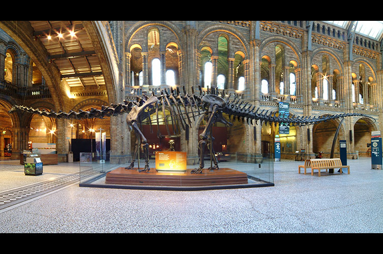 Photo of Dippy in Hintze Hall, with the tail off the ground, taken from the side