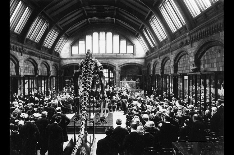 Black and white photo of Dippy surrounded by a crowd at his unveiling at the Museum in 1905
