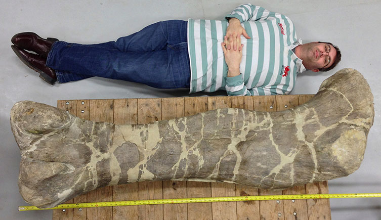 Prof Paul Barrett next to a sauropod fossil that's longer than he is tall