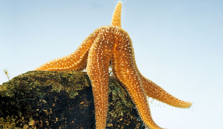 starfish-rock-two-column