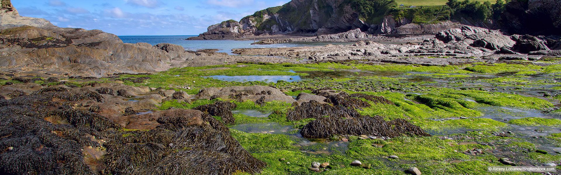 Beach in Devon covered in seaweed
