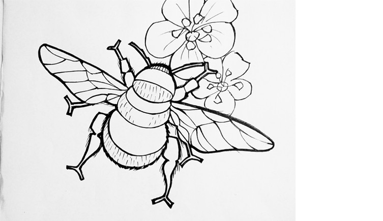 Colouring Pages For Kids And Adults Natural History Museum