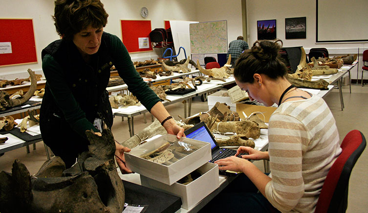 A volunteer helping to digitise part of the Museum's collection