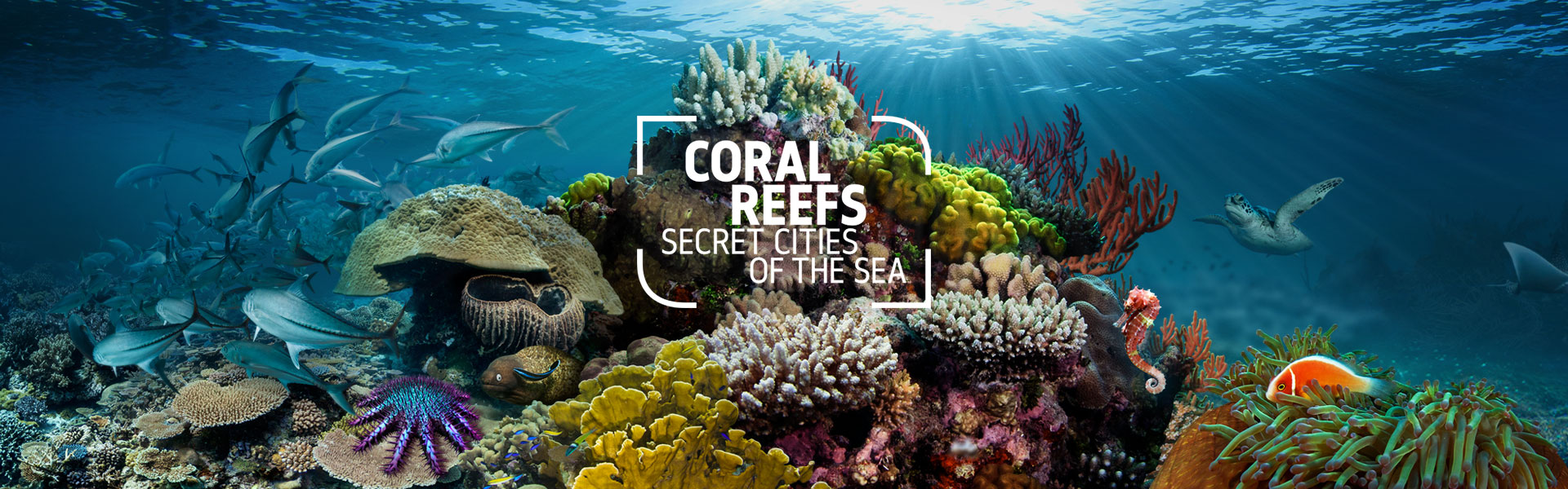 Coral Reefs: Secret Cities of the Sea logo