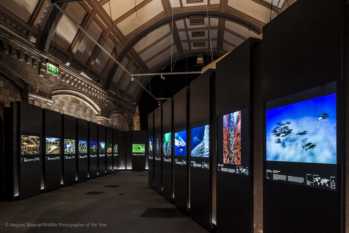 Internal shot of the Wildlife Photographer of the Year gallery