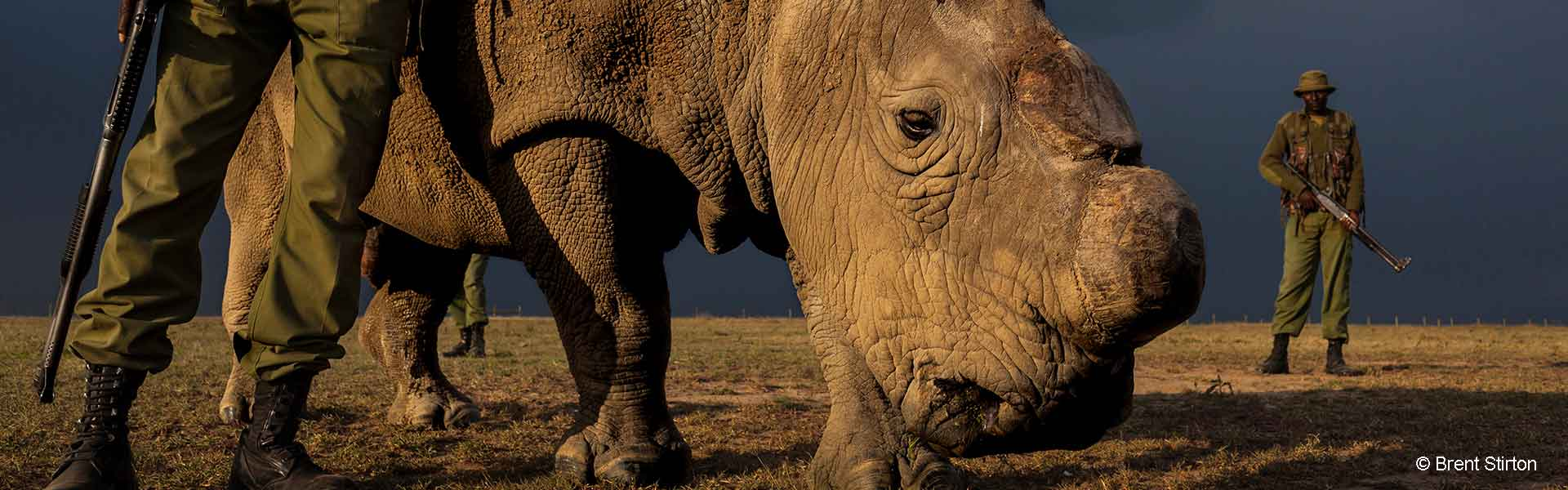 The brutal reality of rhino poaching
