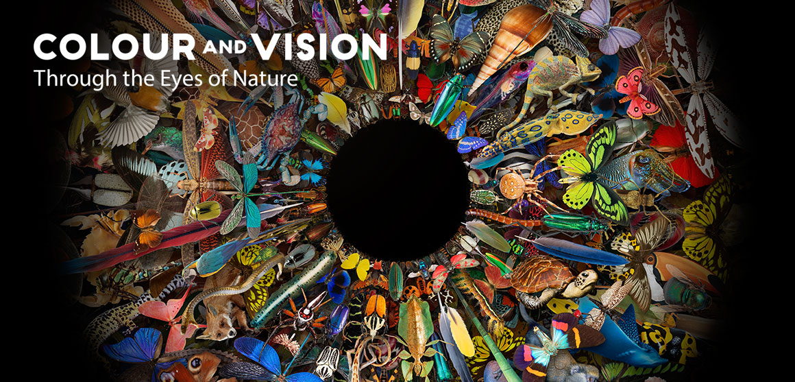 Colour and Vision exhibition graphic