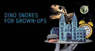 <h4>Dino Snores for Grown-ups</h4>
