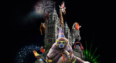 <h4>New Year's Eve: Party Animals</h4>