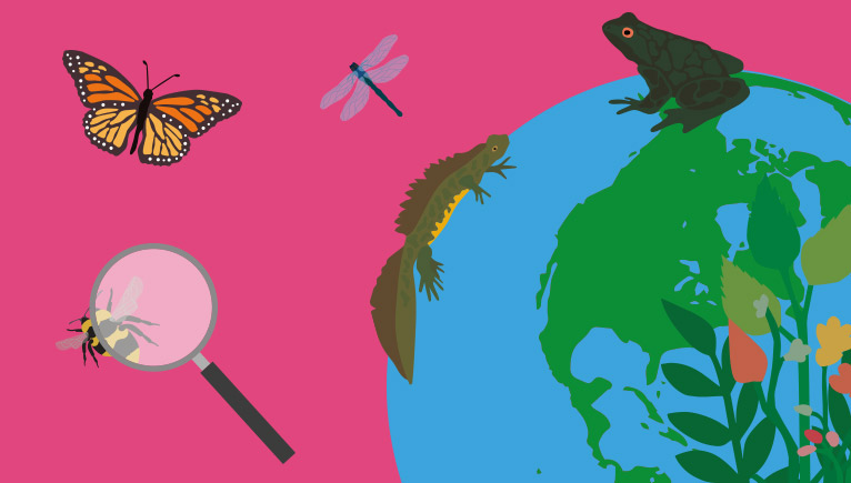 Family Festival: Nature's Champions with Pukka Herbs | Natural History Museum