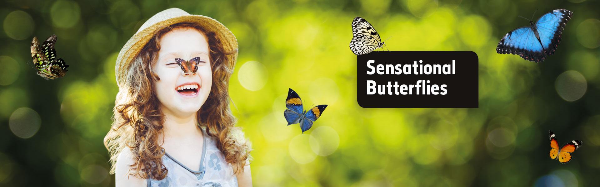 sensational butterflies natural history museum