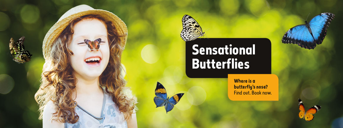 Sensational Butterflies exhibition