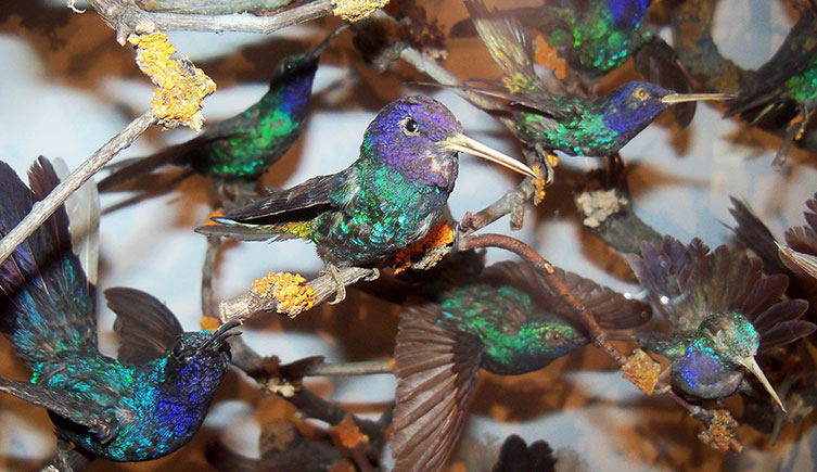 Detail from the hummingbird cabinet