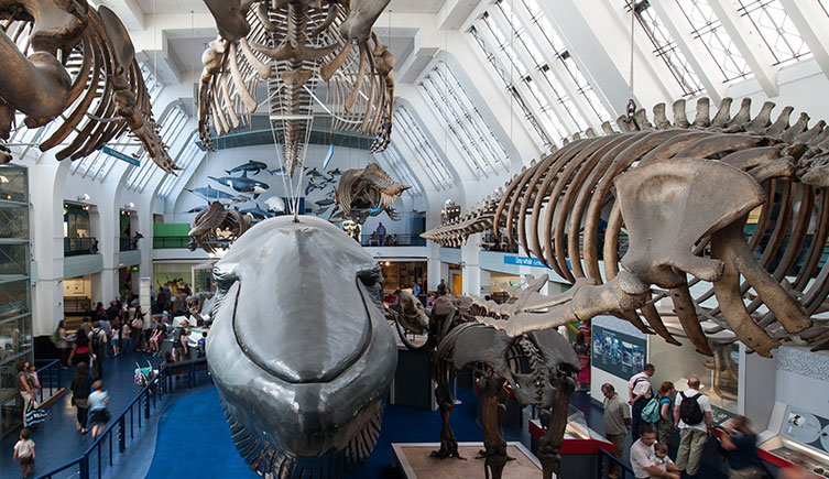 Mammals and blue whale