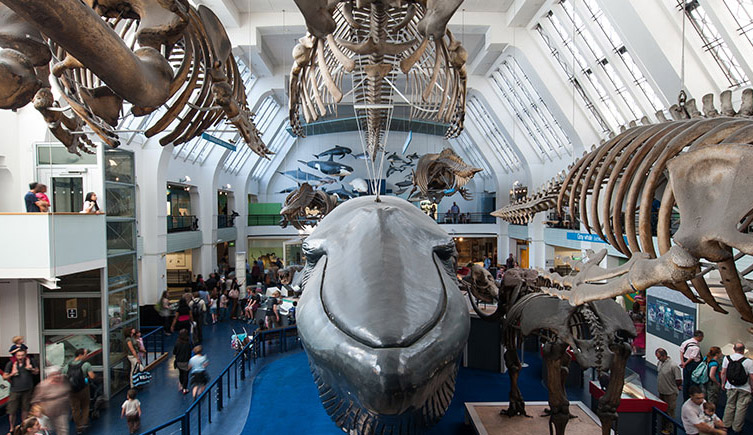 Image result for Natural History Museum london