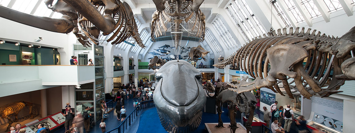 Mammals and blue whale gallery