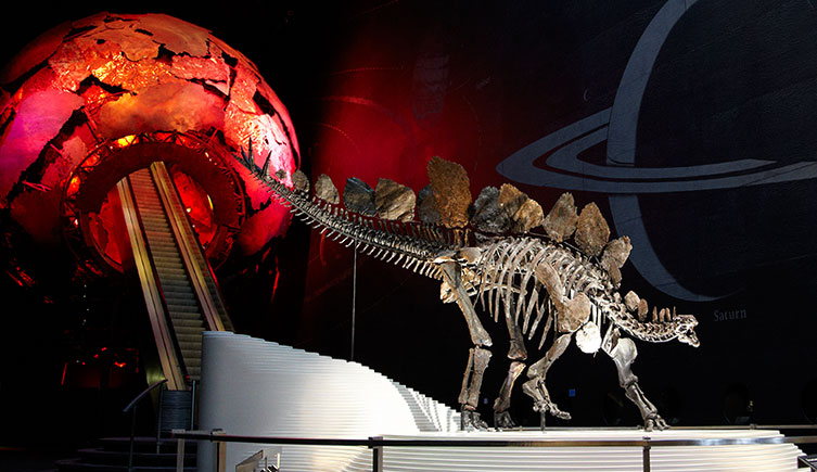 The Stegosaurus in the Earth Hall