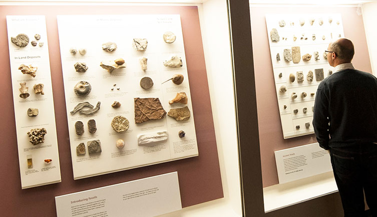 Fossils from Britain