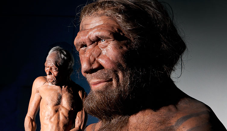 Modern human and Neanderthal model