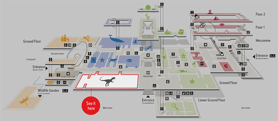 Map of the Museum highlighting the Dinosaurs gallery.